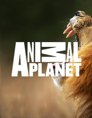 Music for Animal Planet